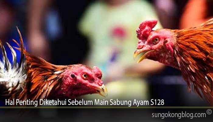 Hal Penting Diketahui Sebelum Main Sabung Ayam S128